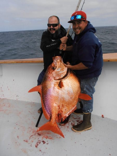 H m landing san diego sportfishing since 1935 for San diego sportfishing fish counts