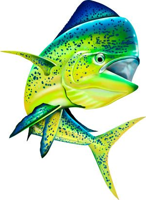 Free Coral Reef Cliparts, Download Free Clip Art, Free Clip Art on Clipart  Library